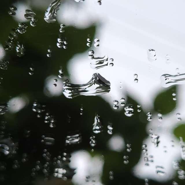 Raindrops and Trees