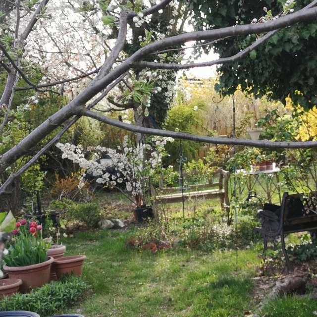 spring - Frühling im Garten