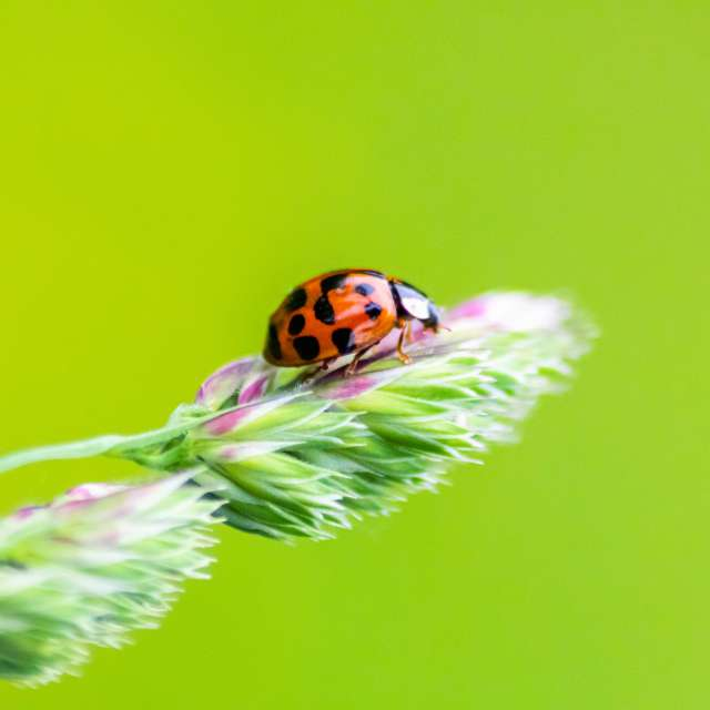 Cute ladybug in spring-time