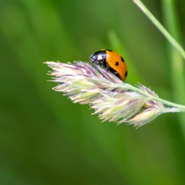 Cute little ladybug talisman