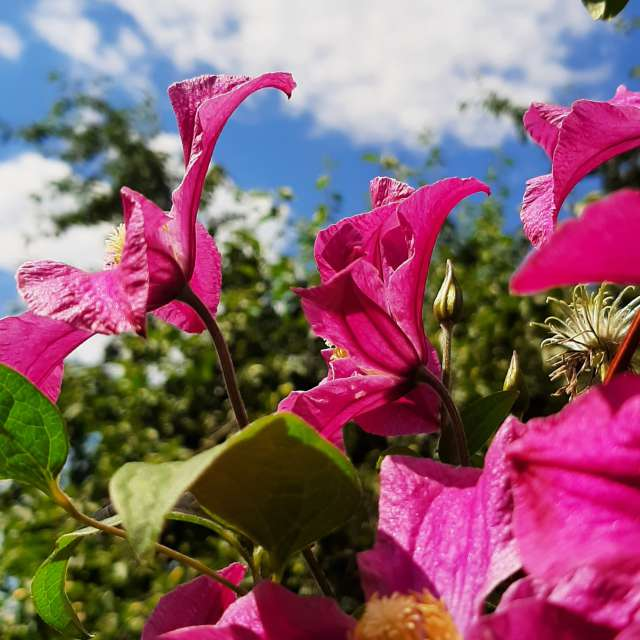 Amazing flowers Mygarden July