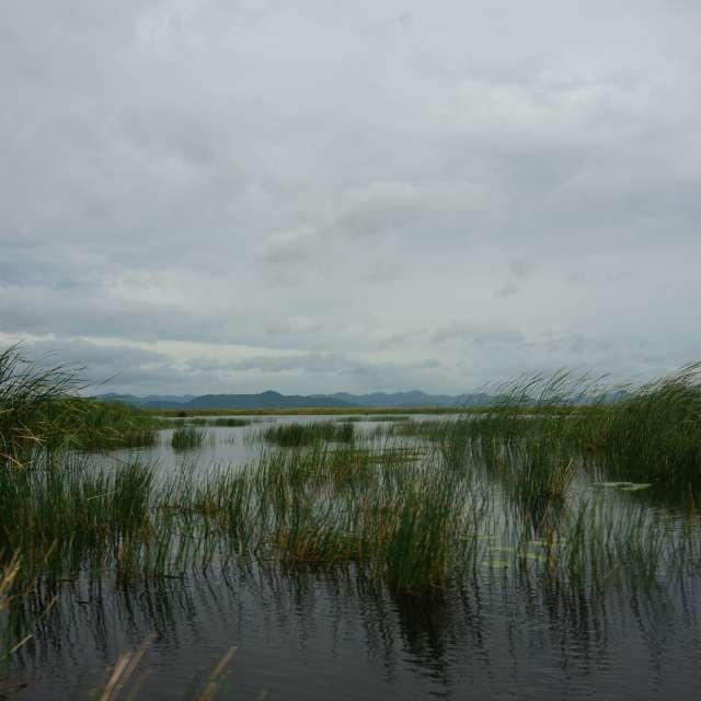 Between water, sky and herbs..
