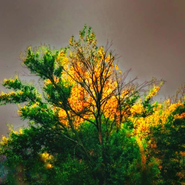 Bright Trees in Stormy Skies