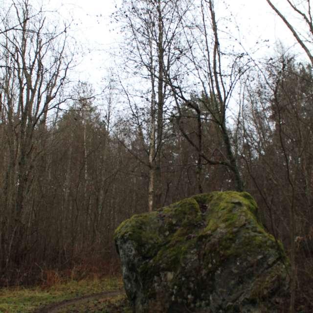 forest in november