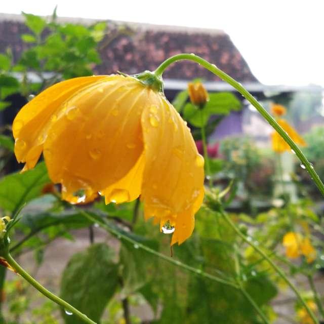 Flower is bunga