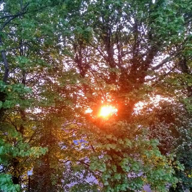Sunset by my window