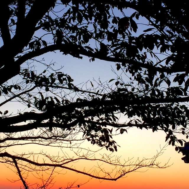 樹木のシルエットと夕景