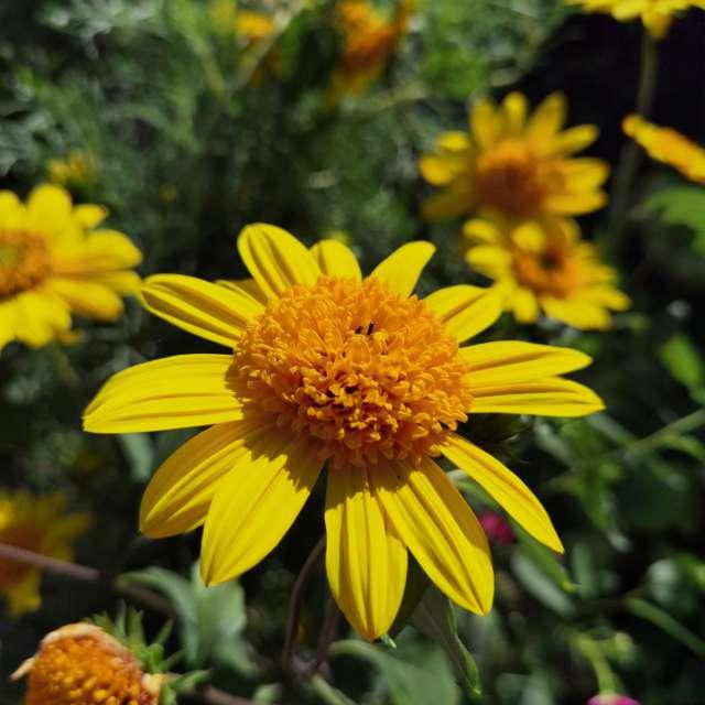 Flowers - wild