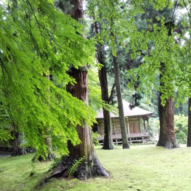 緑の木々がささやいています。