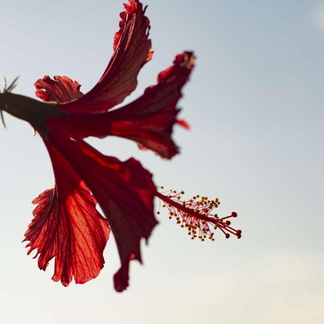Uma flor sob um belo céu