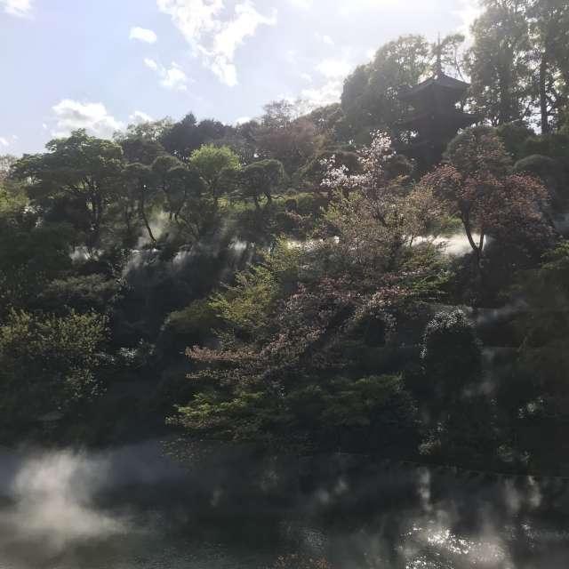 晴天と椿山荘と霧