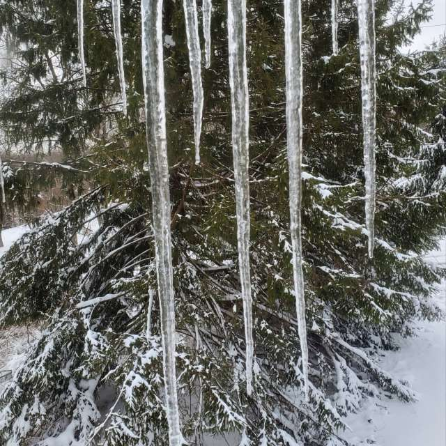 Icicles after storm.