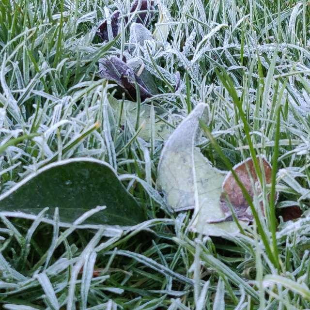 Amanecer con fuertes heladas.