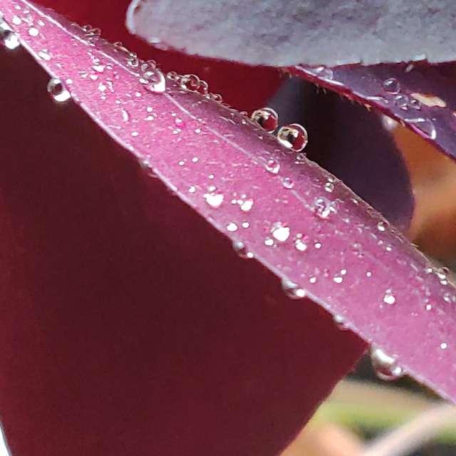 Lluvia sobre pétalos de flor.