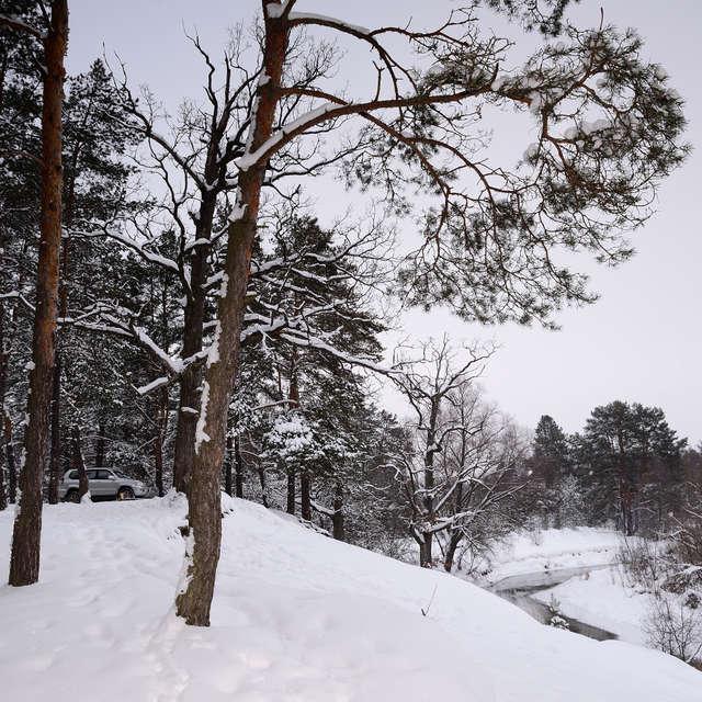 Зимний лес у берега реки.