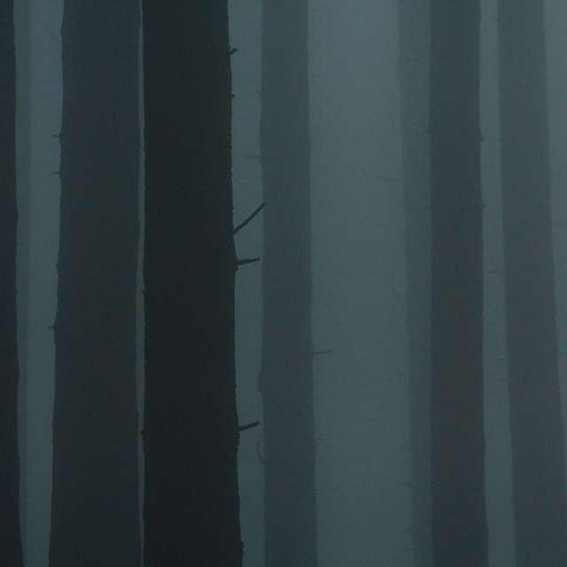 fog covers dark forest