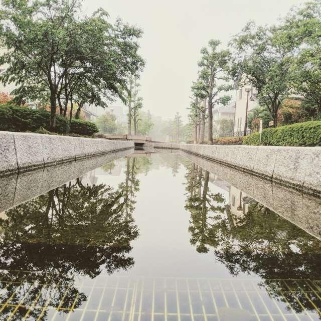 霧の中、綺麗に反射
