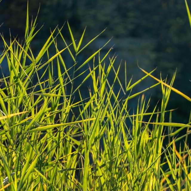 Autumn grass in the sun.