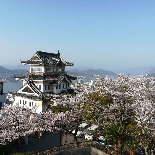 Castle in Cherry Blossoms