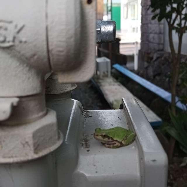 裏庭にひっそり、と隠れるカエルさん