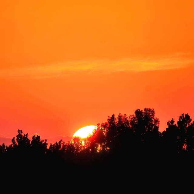 Orange Sunset Closeup