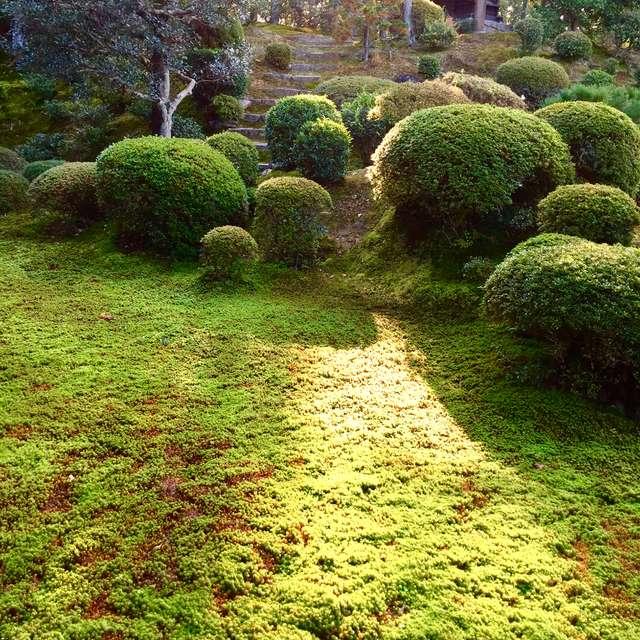 開山堂-苔の庭園-