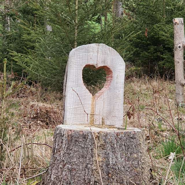Lovesign in the wood