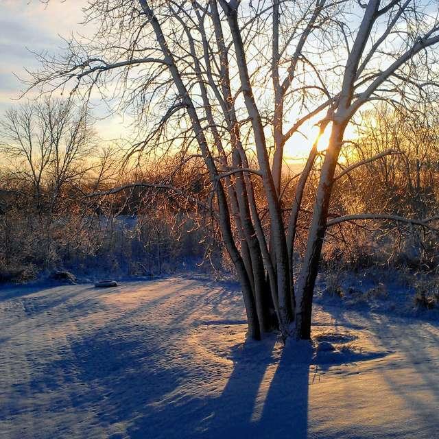 Chilly Winter Sunrise