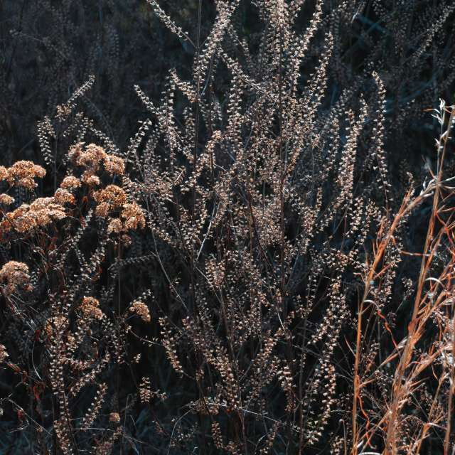 Winter Textures and Colors