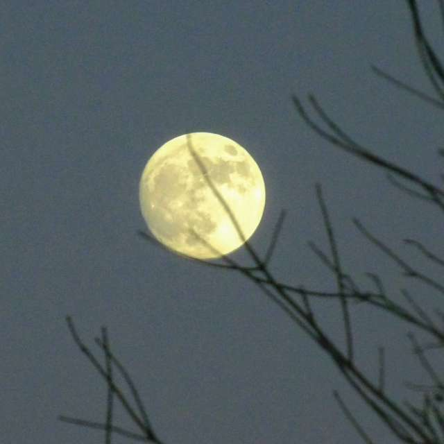 Moon Caught by Tree