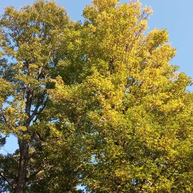 Podzimní krása v parku