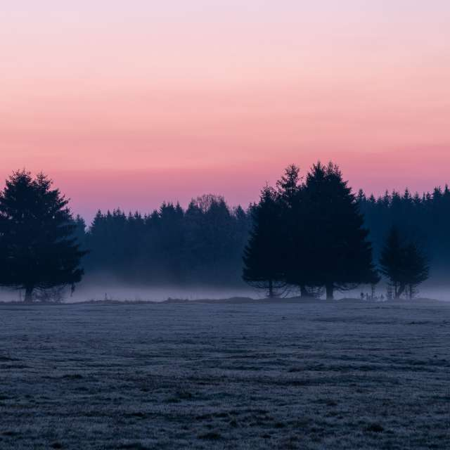 Morgenröte im Harz