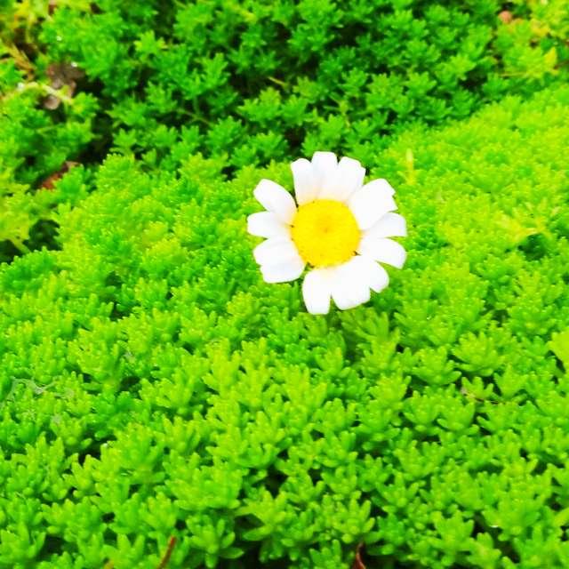 大草原の小さな花