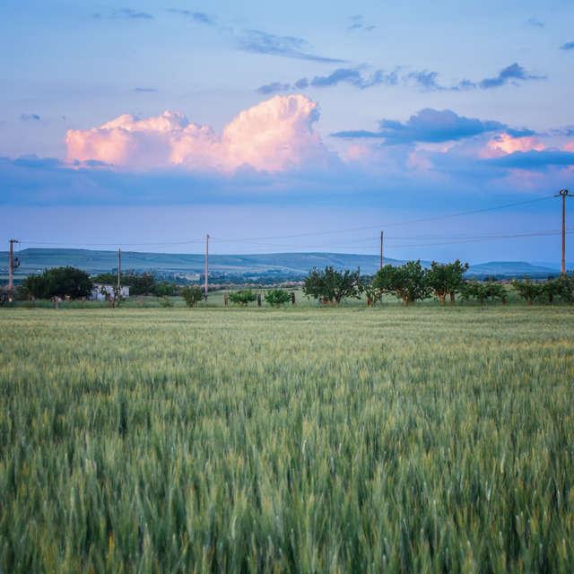 Sunset in green fields