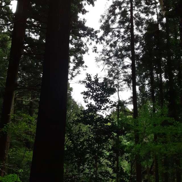 森林浴が気持ちいい
