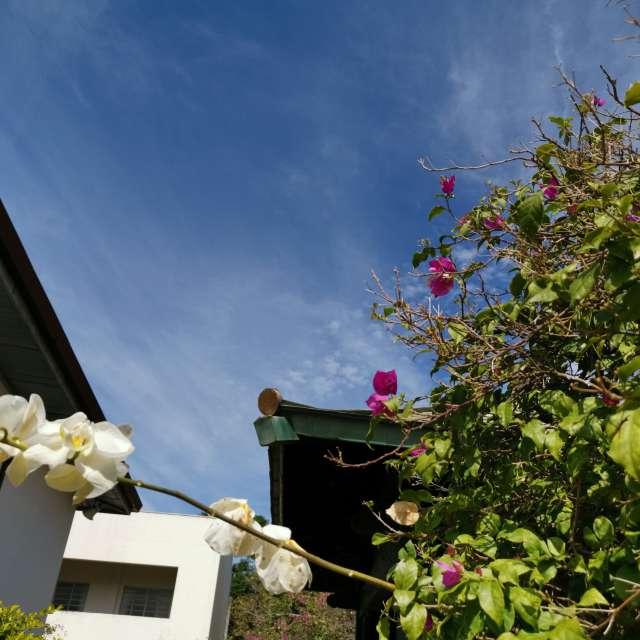 花と植木と屋根と空