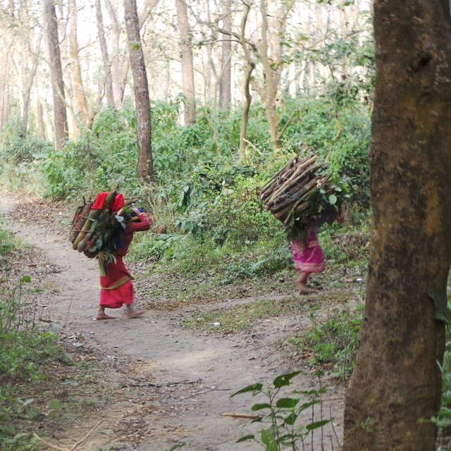 Nepalese wood carriers