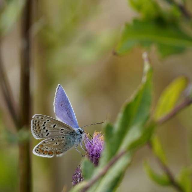 The moth eats nectar