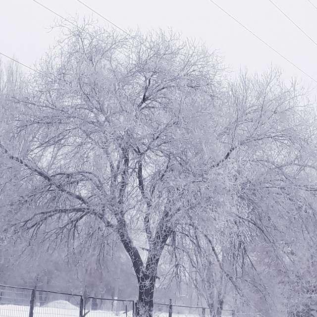 Деревья в серебре