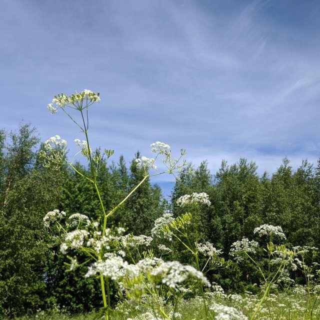 Цветы на лесной поляне