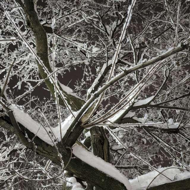 Внутри снежного дерева