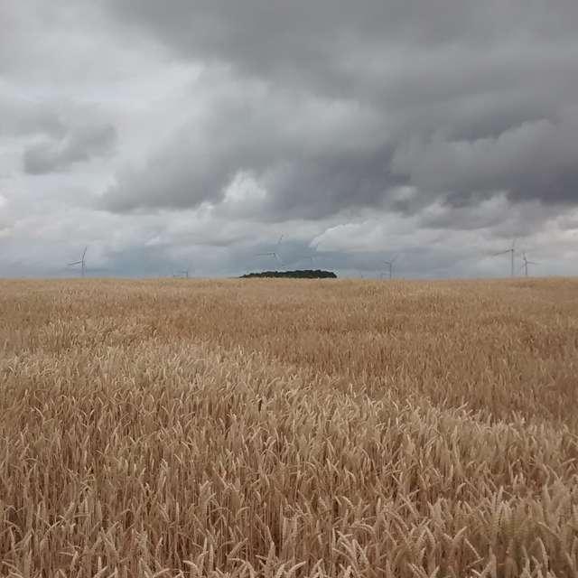 Wolken überm Feld