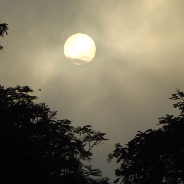 Neblina da Manhã