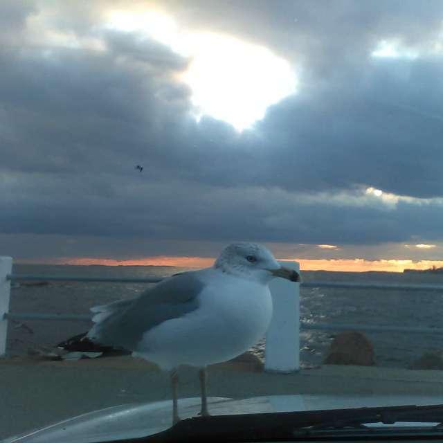 Bird On A Cloudy Day