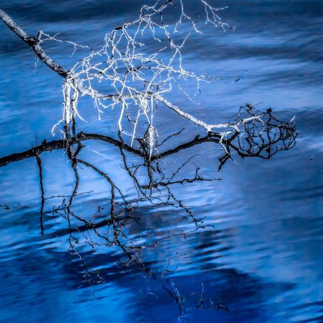 Branches over Water, BC, CA