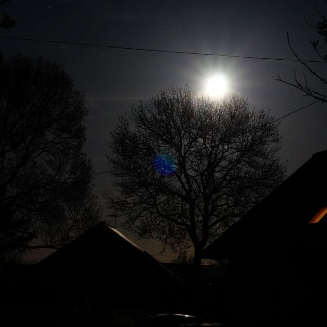 Moonshine in the dark night