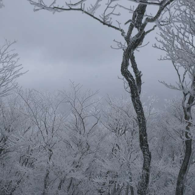 樹氷を見に行ってきました