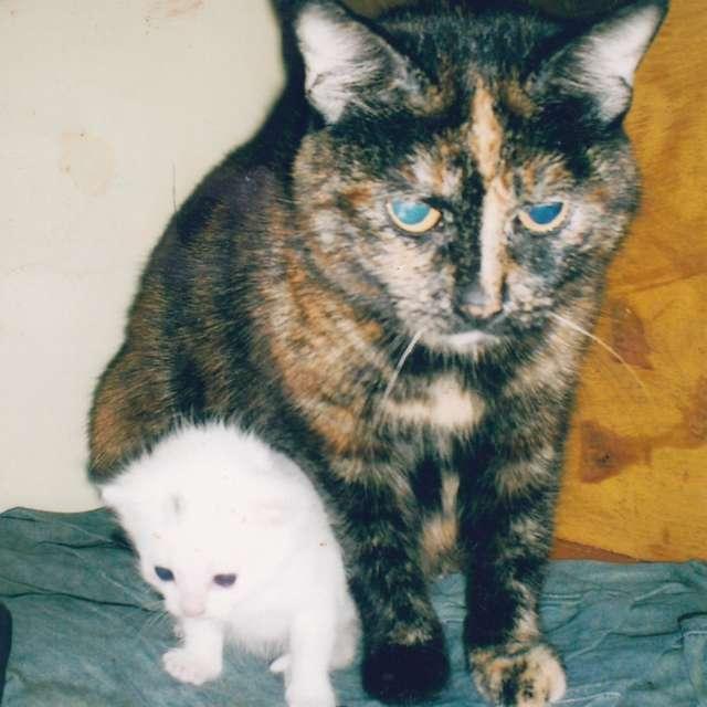 Мой белый кот с мамой)