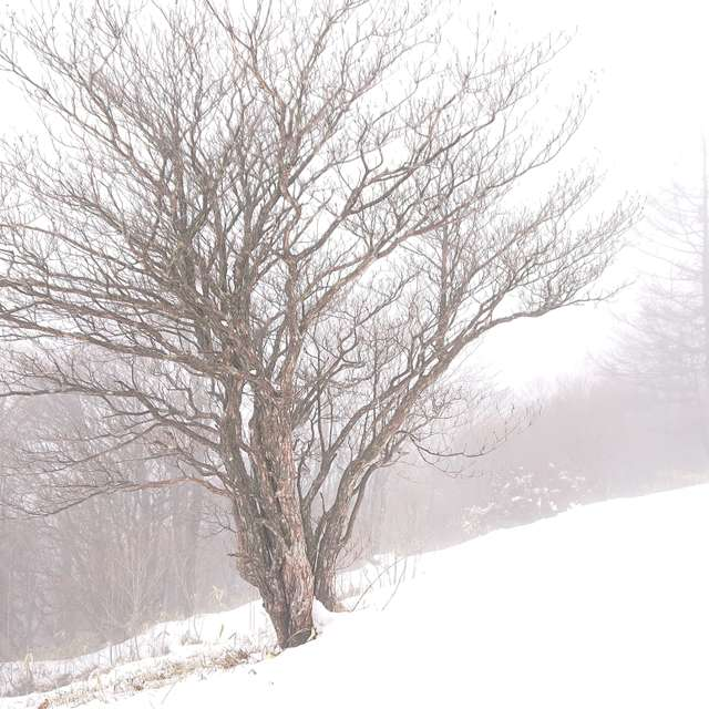 霧と雪の霧降高原