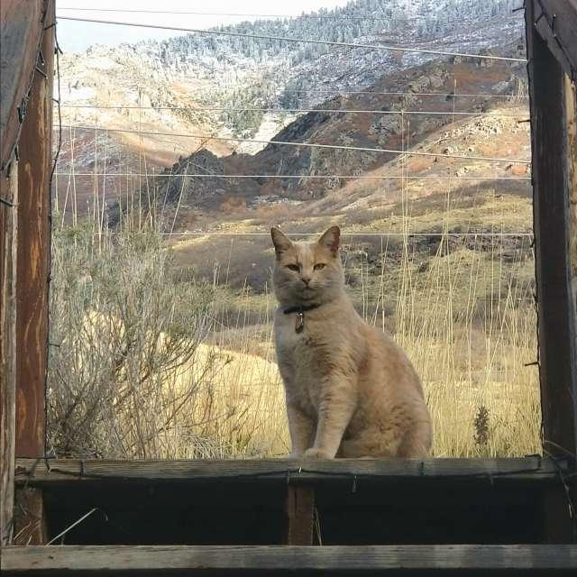 Cat, Wasatch Front, Utah